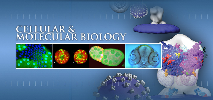 Which major would lead to molecular biology?