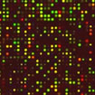 Molecular Biology, Genetics, and Genomics