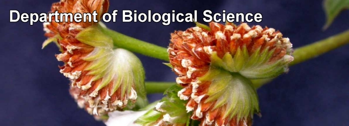 Department of Biological Science