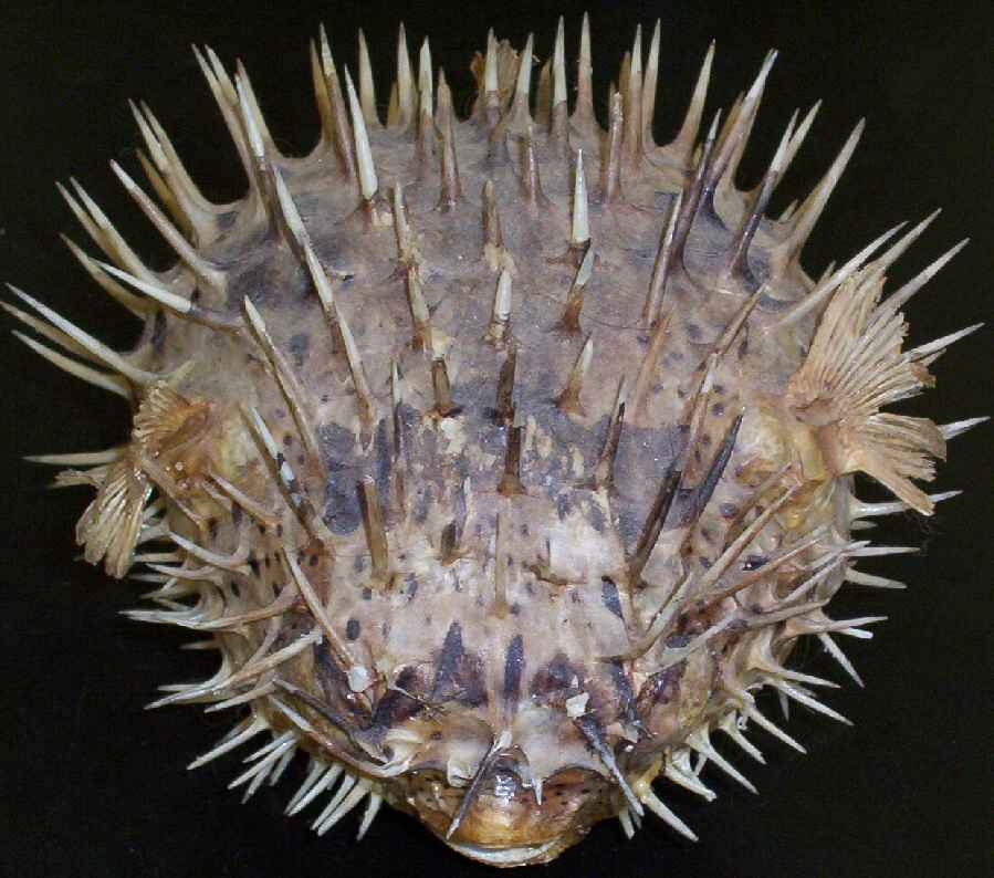 Kingdom Animalia- Eucoelomates - Phylum Arthropoda ...